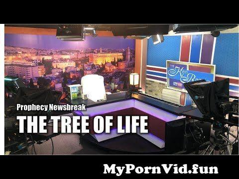 View Full Screen: the tree of life.jpg
