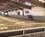 Nicola Steiner Horsemanship