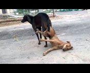 OMG Animals