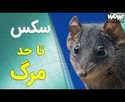 WOW Persian