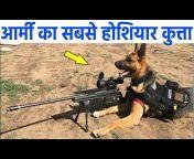 BB News Hindi
