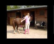 GS_Equestrian