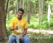 Script Writer / Assistant Director : Krith Srimudkul