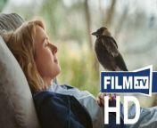 Beflügelt - Ein Vigel namens Penguin Bloom Trailer Deutsch German (Naomi Watts, Bruna Papandrea, Steve Hutensky, Joel Pearlman, Emma Cooper, Ricci Swart, Jodi Matterson, Bradley Trevor Greive, Meryl Metni, Cameron Bloom - OT: Penguin Bloom)<br/>▶ Abonniere uns! https://www.film.tv/go/abo<br/>Alle Infos: https://www.film.tv/go/54591<br/><br/>Like uns auf Facebook: https://www.facebook.com/film.tv<br/>Folge uns auf Twitter: https://twitter.com/filmpunkttv<br/>Abonniere uns bei Instagram: https://www.instagram.com/film.tv<br/>Nichts mehr verpassen mit unserem kostenlosen Messenger Abo: https://www.film.tv/go/34118<br/>Ganzer Film bei Amazon: https://www.amazon.de/gp/search?ie=UTF8&keywords=Beflügelt+-+Ein+Vigel+namens+Penguin+Bloom+Trailer&tag=filmtvde-21&index=blended&linkCode=ur2&camp=1638&creative=6742<br/><br/>Die Familie Bloom ist glücklich – bis eines Tages ein schrecklicher Unfall ihr Leben für immer verändert. Auf einer Urlaubsreise nach Thailand stürzt Sam schwer und ist fortan querschnittsgelähmt. Beflügelt - Ein Vigel namens Penguin Bloom.Schauspieler: Naomi Watts, Andrew Lincoln, Jacki Weaver, Rachel House, Gia Carides, Leeanna Walsman, Lisa Hensley, Randolph Fields, Felix Cameron, Abe Clifford-Barr, Griffin Murray-Johnston